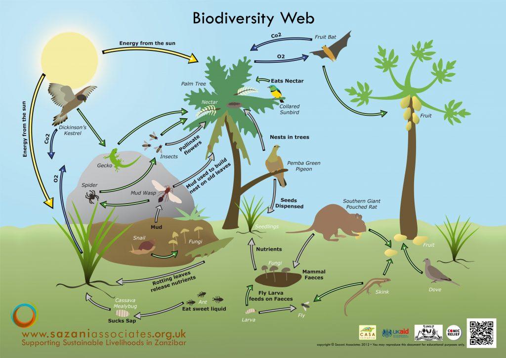 biodiversitya4_0